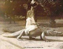 Doreen taking an alligator ride-1920s
